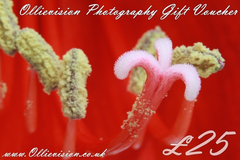 wedding photography gift certificate, Leeds wedding photographer gift vouchers, vouchers for wedding gifts, Bradford family photography shoots